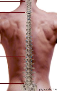 Yoga Back Pain Yoga For Lower Back Pain | Chiropractors Melbourne