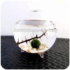 Japanese Marimo Moss Ball Single Globe Aquarium by AGiftofNature, $23.00