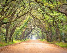 Botany Bay Road near Edisto
