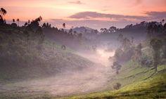 tea plantat, burundi, magazines, travel, tea estat