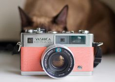 A camera and a cat. This is so you.