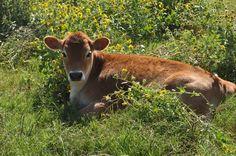 Sand Creek Raw Milk Dairy Farm Tour   www.homemademommy.net #article #rawmilk #dairyfarm