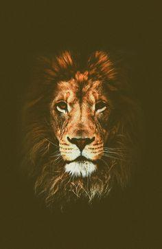 lion art print.