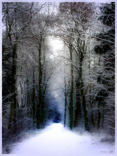 .winter gothic