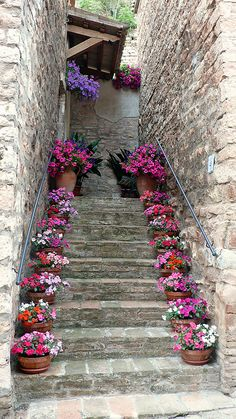 Stairs with potted plants (petunia & geranium I think). Beautiful idea for front porch stairs