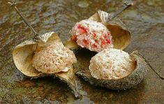 Raw Food Recipes: Macaroons