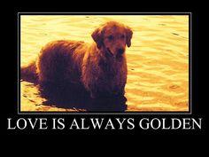 Love is always Golden