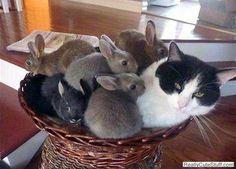 Bunny swarm!