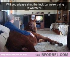 TV Buddies…