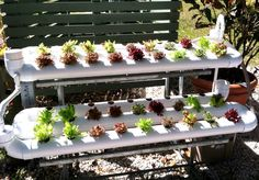 Hydroponic gardening at the Edison & Ford Winter Estates