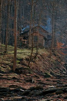 .log cabin in the woods