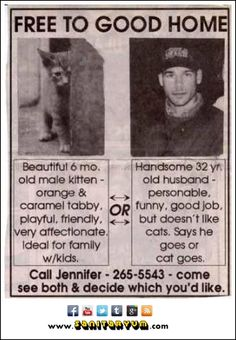 Free to Good Home: Husband or Kitten