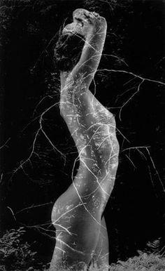 Symbiosis 1971 selenium-toned gelatin silver print