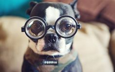 21 Facts About Dogs That Will Blow Your Mind, including an explanation for Frito feet.