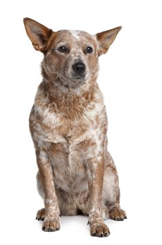 Two pet health supplements you should feed your senior pets