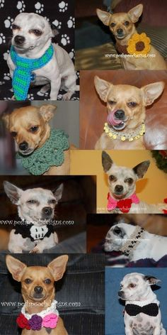 dog cloth, dog collars, crochet dog collar