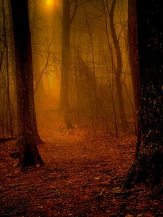 Into the Mystic, Appalachian Trail, Virginia - The Best Travel Photos