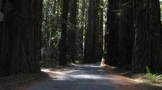 Giant Redwoods RV & Camp