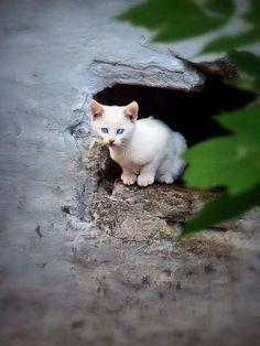 magical-meow