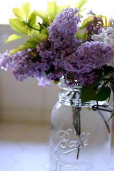 Lilacs and mason jar. Love. ball jars, spring flowers, canning jars, lilac, favorit flower, fresh flowers, mason jars, garden, beauti flowerspl