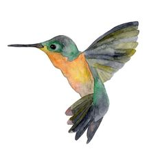 Hummingbird. watercolor. yeeps.