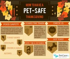 steps to a pet safe thanksgiving infographic the wet nose press