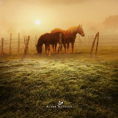Horses to the dawn