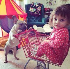 """What? She wanted me to Push Her!"", French Bulldog."