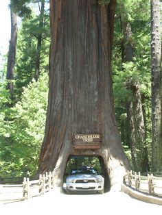 Drive through a redwood and enjoy other roadside attractions on Northern CA's Redwood Highway.
