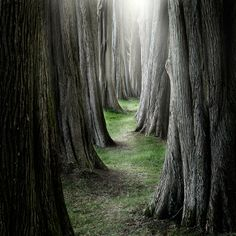 forests, enchant wood, dream, natur, trees, beauti, pathways, ian david, the road
