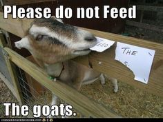 Please do not Feed  The goats.