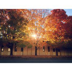 Roadside Fall in Greenville SC