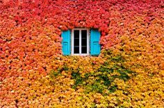 Wall of fall
