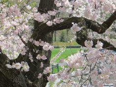 NY Botanical Spring 2014