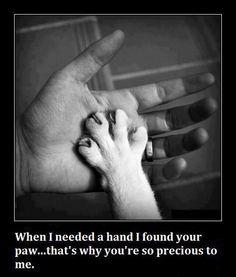 a paw...