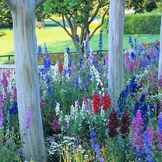 meadow of larkspur