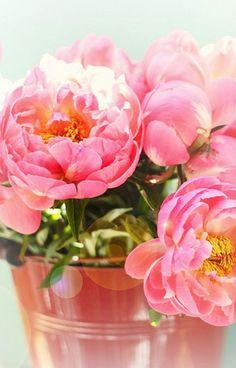 Peonies! My favorite flower :)