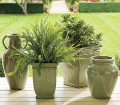 Google Image Result for http://1.bp.blogspot.com/_qm4HVkF5dxY/StjqlM9yw0I/AAAAAAAABh0/Jqj-vsq-LRE/s400/Pottery%2BBarn%2Bplants.png
