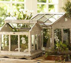 Terrariums #potterybarn