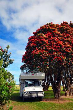 West coast of New Zealand. Photo by Cherie Palmer