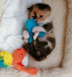 Memebon the kitten.