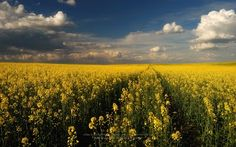 """Márk Borbély 04/giu/2013  """"The promise land""""  Location: Pannonhalma, Hungary"""