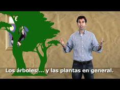 Efecto invernadero, ciclo de carbono y el cambio climático    subtítulos español