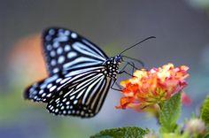 fotos de mariposas amarillas
