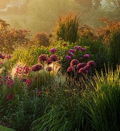Alliums & Grasses / repinned on toby designs