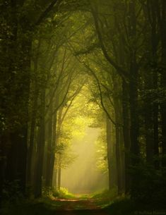 lights, forests, paths, wood, green, trees, place, roads, netherlands