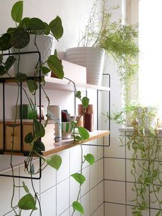 bathroom plants.