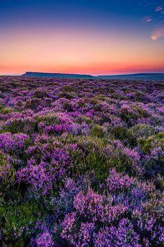 Sunset Over Derbyshire Heather Moorland
