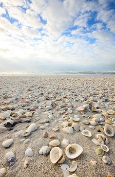 shell beach, Sanibel Island