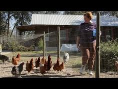 Worming Chickens Naturally: How to Worm Chickens